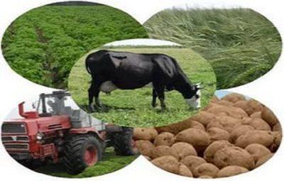 Агроөнеркәсіптік кешенді дамыту бағдарламасы – ауылды да, қаланы да қамтитын ауқымды жоба…