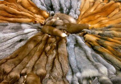 Теріден жасалған киімдерді сатуға тыйым салынады