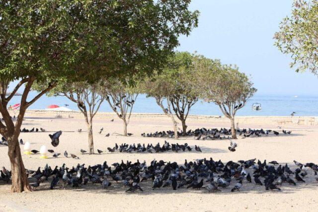 Кувейтте ауа-райы 70°C болған
